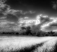 Peace on the Farm by DavidHornchurch