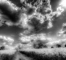The Infrared Farm by DavidHornchurch