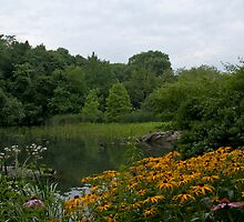 The Pond at Central Park New York by Rob Schoon