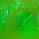 Green Void, Customs House, Sydney. NSW, Australia by Adrian Paul
