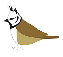 Crested Tit Bird / Lophophanes Cristatus Photographic Print