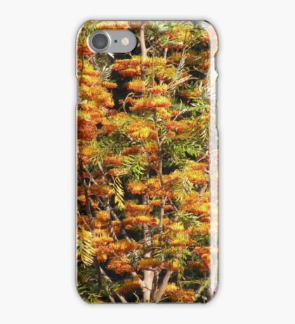 In all it's glory ... Grevillea robusta iPhone Case/Skin