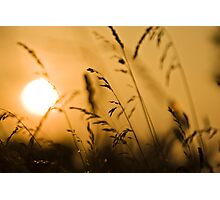 Summer Grass in the Summer Sun Photographic Print