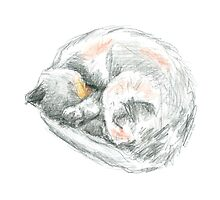 Cat Nap Sketch by DominicWhiteArt