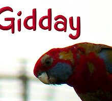 Gidday Gidday by flipteez
