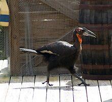 I'm not a Chicken!! by Donna Adamski