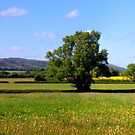 The Malvern Hills by mikebov