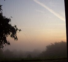 spiders web at sunrise by Melody Dawn Bills