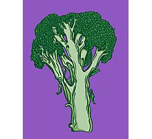 Anatomic Broccoli Photographic Print