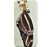 New Zebra Longwing Butterfly iPhone Case/Skin