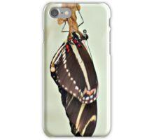 New Zebra Longwing Butterfly iPhone Case/Skin