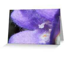 Fuzzy Blue Greeting Card