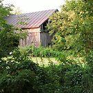 Cedar Barn and Rusted Metal Roof by linmarie