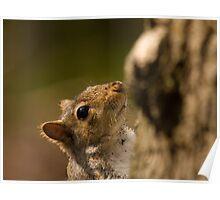 tree rat Poster
