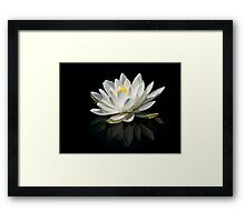 Pure Lily Framed Print