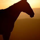 Horse in Silhouette by Photodx