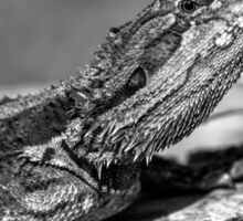 Black and White Baby Bearded Dragon Sticker