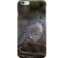 Crested Pigeon iPhone Case/Skin
