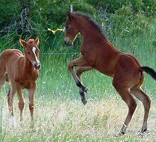 Race ya to the barn! © by jansnow
