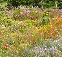 flower garden by ishelbyme