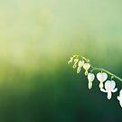 Green Morning by Joakim