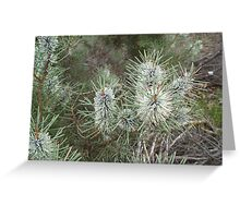 Hakea lehmaniana Greeting Card