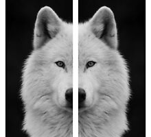 Barred White Wolf by kelsiroth2