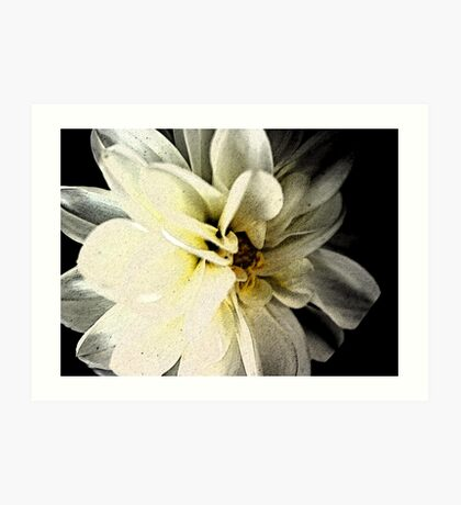 dahlia on black Art Print