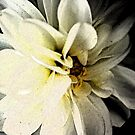 dahlia on black by Lynne Prestebak