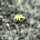 Yellow by kerryjovita