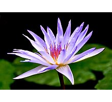 Water Lily 2 Photographic Print