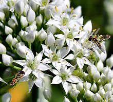 'Chives and Hoverflies' by Scott Bricker