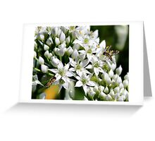 'Chives and Hoverflies' Greeting Card