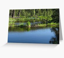 ALASKA BEAVER HABITAT Greeting Card
