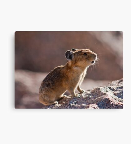 The Pika Project, II Canvas Print