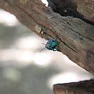 Rainbow bug by Elena Martinello