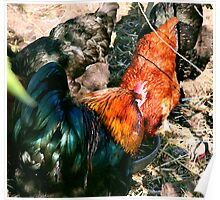 Fowl huddle Poster