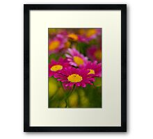 Daisy's in water color Framed Print