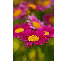 Daisy's in water color Photographic Print