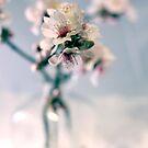 the softness of spring by Lauren  Hewitt