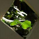 Green leaf by Jesper Høgsdal