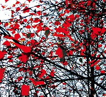 Bloodshot Autumn by robinsontate