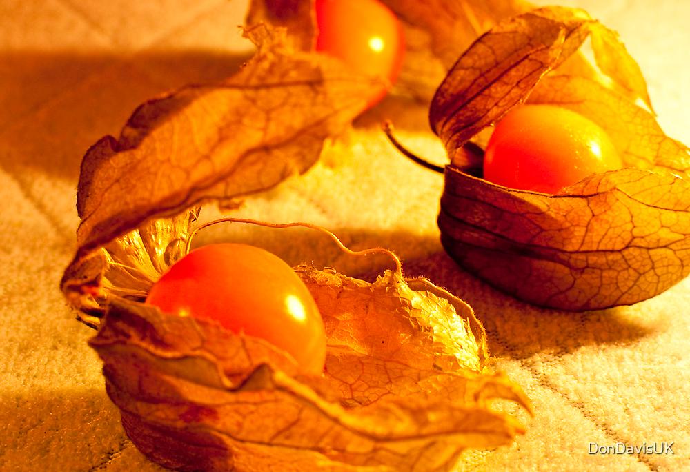 Fruit in a Basket: Physalis Fruit by DonDavisUK