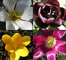 Flowering Bulbs - Four Frame Collage by BlueMoonRose