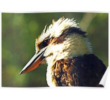 Kookaburra King Poster