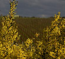 yarra valley rejuvenation (spring is on its way) by leabrigitte69