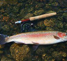River Rainbow by wildfish