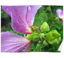 stinkbug, pretty flower Poster