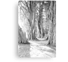 Harry Potter ????? Canvas Print