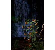 Flower in the Falls Photographic Print